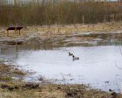 Субботник на экологической тропе Каменная горка